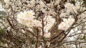 2月某日 梅の花