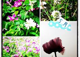 麗らかな春の日に